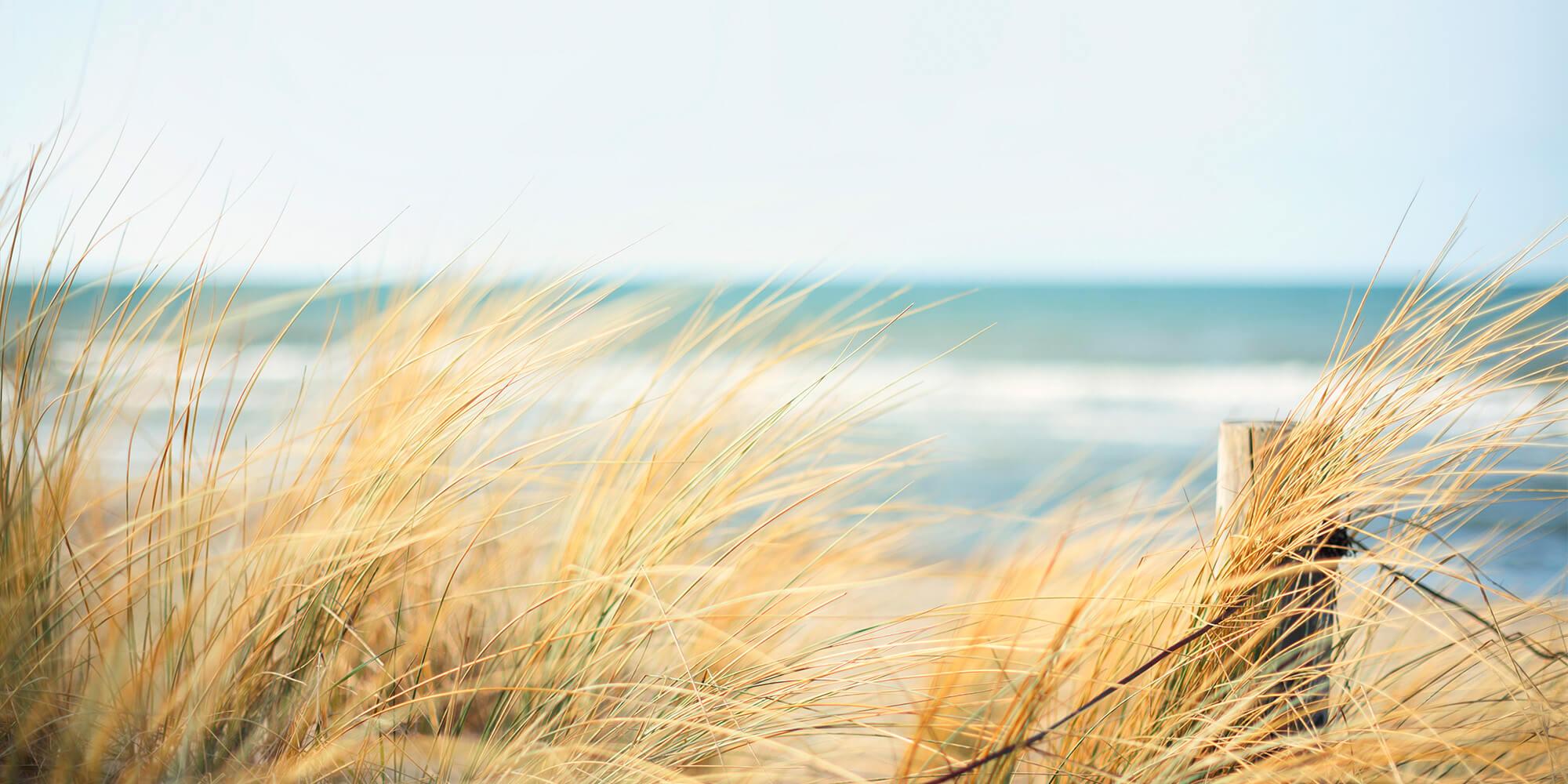 nature grassy beach