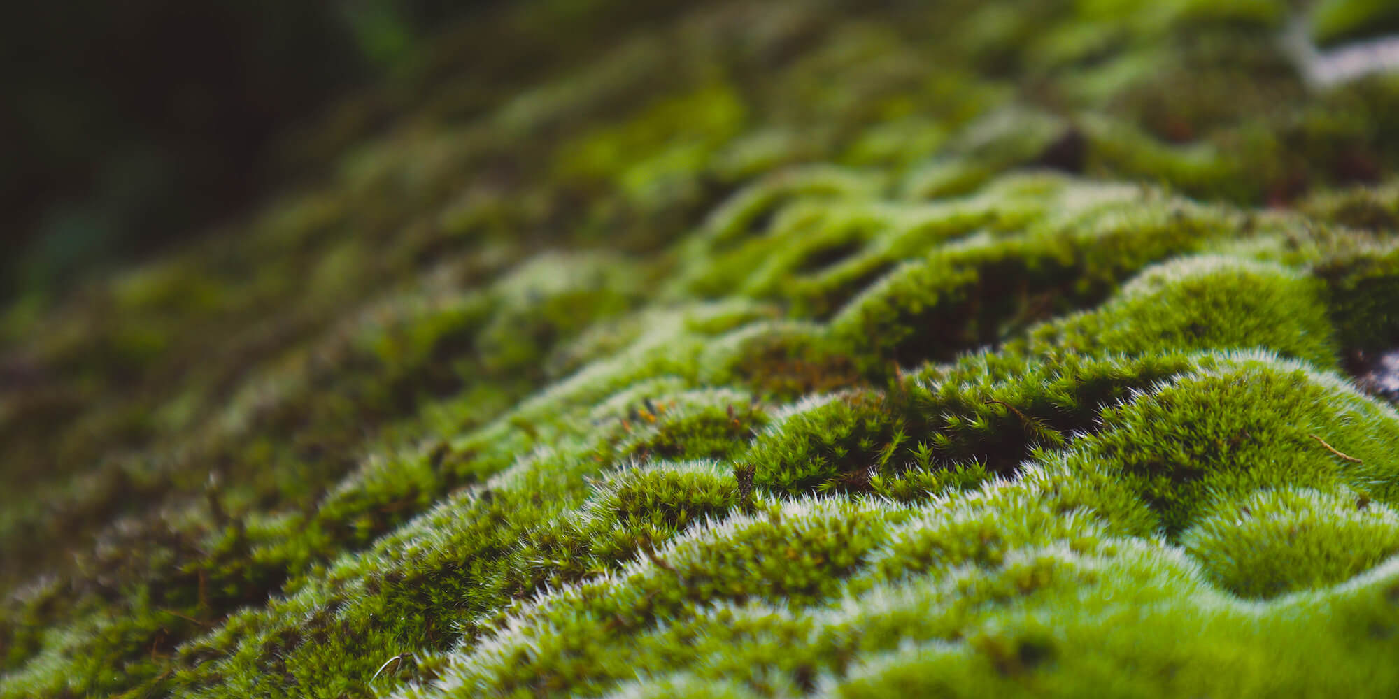 Close up of moss growing